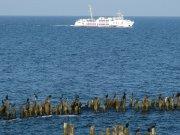 Fähren ab/zu den Bansin Hotels
